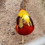 Неизвестная мне птица